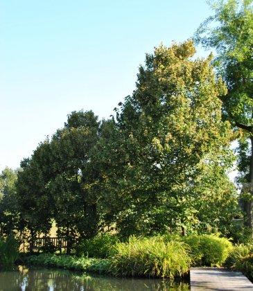 Bomen Voor Bijen 1-1