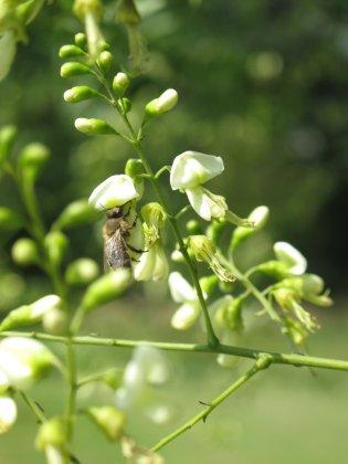 Bomen Voor Bijen 3