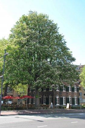 Bomen Voor De Toekomst 3